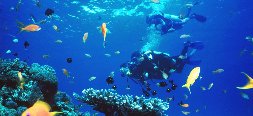 dykning-i-röda-havet